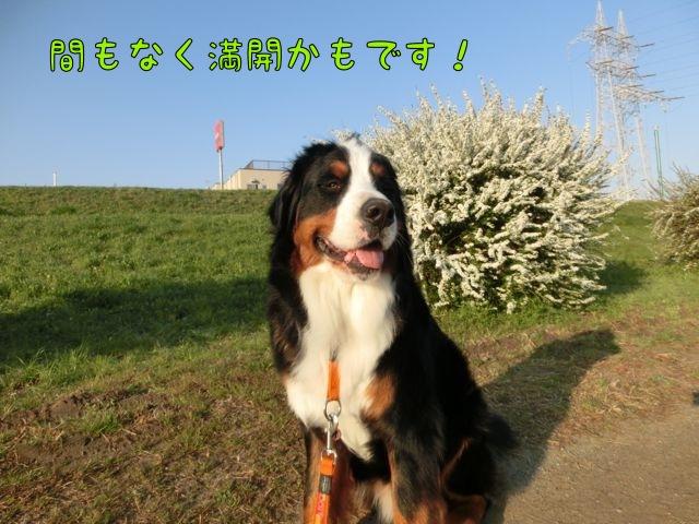 CIMG9032.jpg