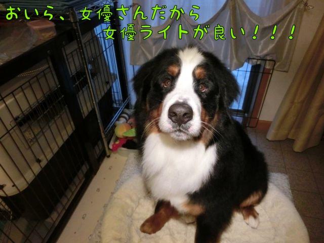 CIMG9146.jpg