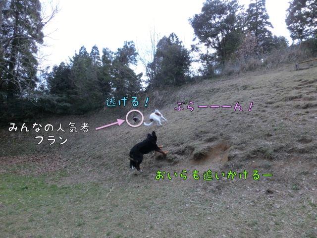 CIMG9343.jpg