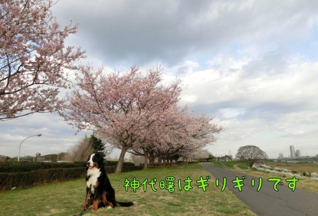 CIMG9420.jpg