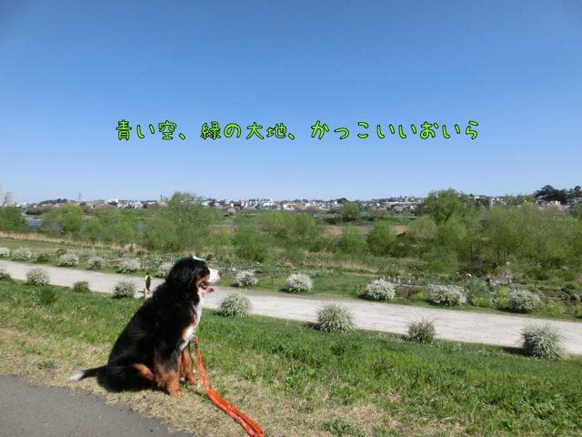 CIMG9677.jpg