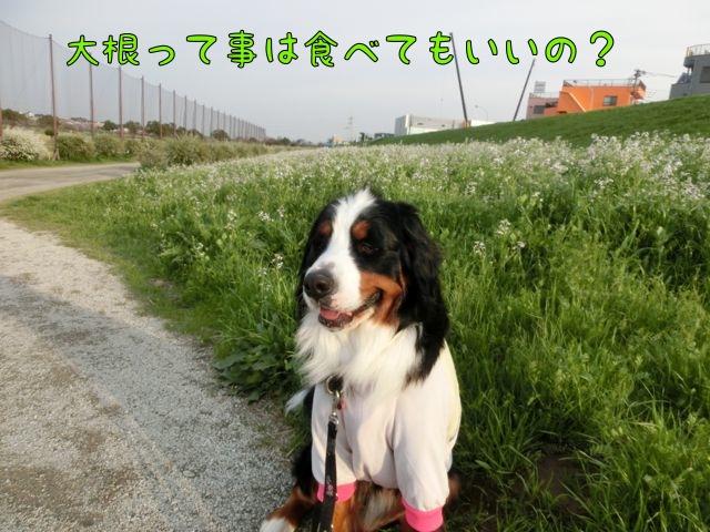 CIMG9810.jpg