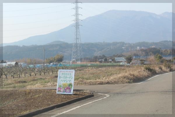 伊豆 クリスマスローズ 20140225