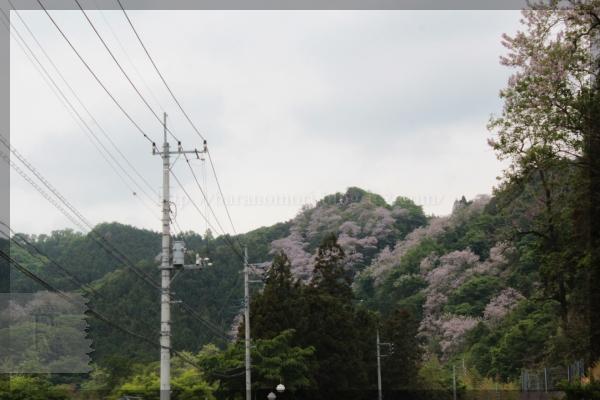 日野 20140515