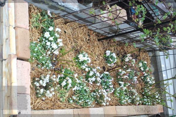 砕石駐車場 花壇 20140330