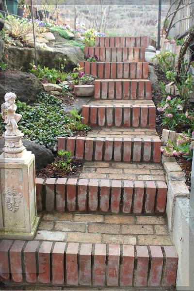 階段 クリスマスローズ 20140327