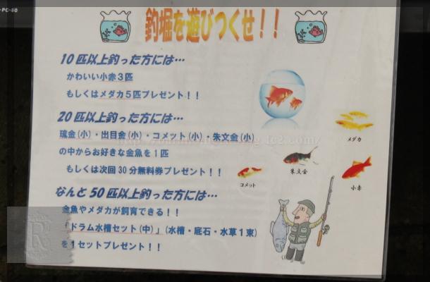 金魚坂 20140907