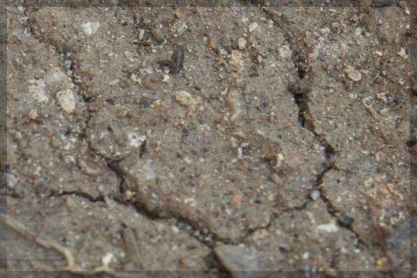 米ヌカ 20140415 土ごと発酵 実験