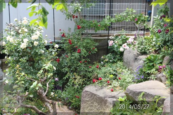 ロックガーデン 20140526