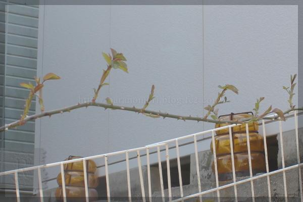 メインガーデン 寝室前 20140408 ソンブロイユ