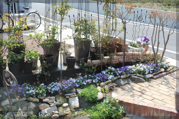 階段脇 コンクリート駐車場脇 花壇 ビオラ パンジー 20140408