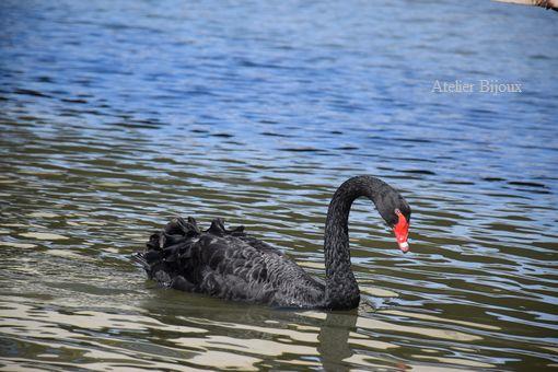 052-黒鳥