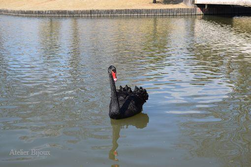 047-黒鳥
