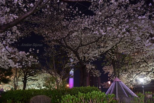 073-隅田公園スカイツリー