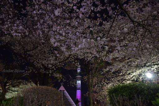 075-隅田公園スカイツリー