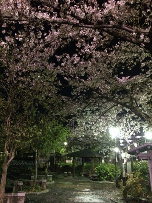 103-夜桜