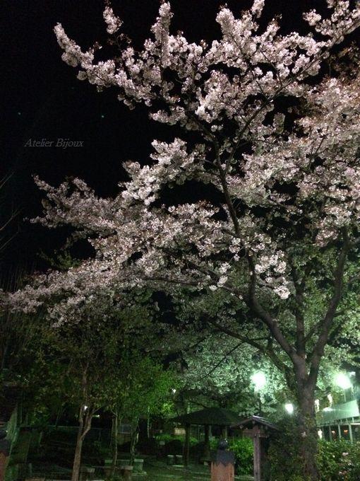 110-夜桜