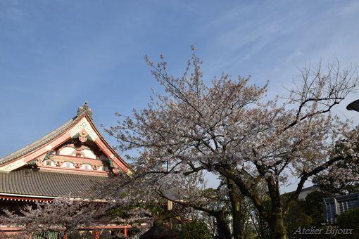 002-本殿桜