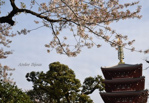006-五重の塔桜