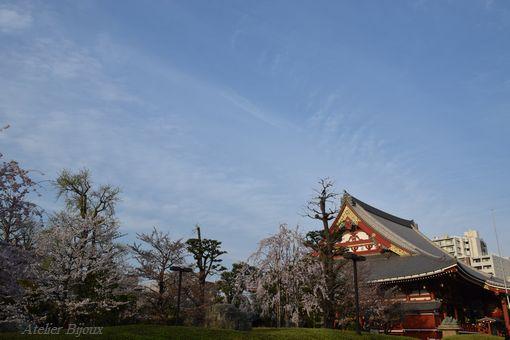 019-本殿と桜
