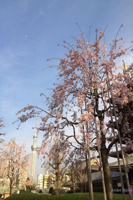 148-桜とスカイツリー