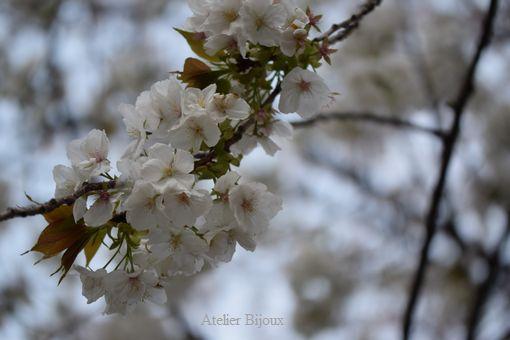 083-桜
