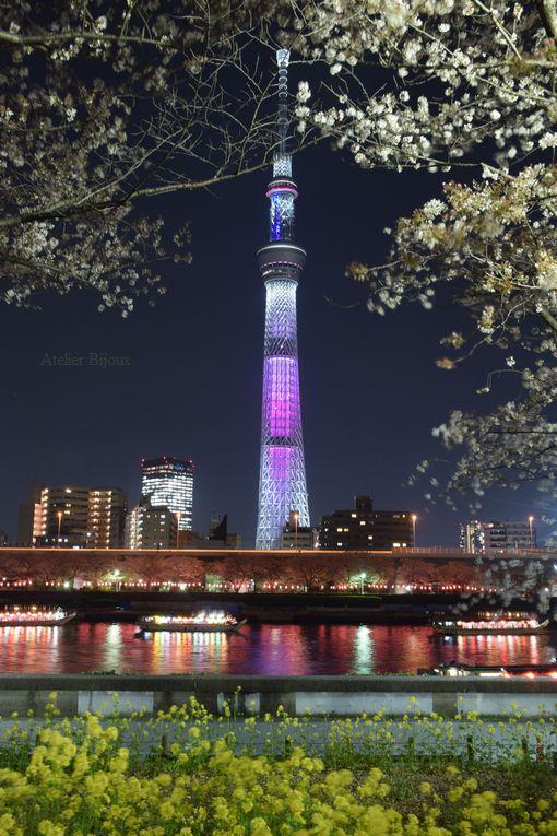 113-スカイツリー隅田川-菜の花