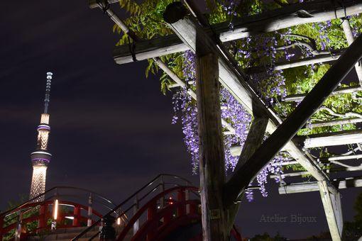017-藤-橋-スカイツリー