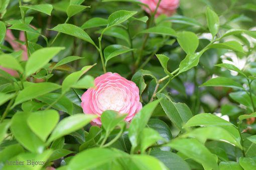 007-牡丹園の植物
