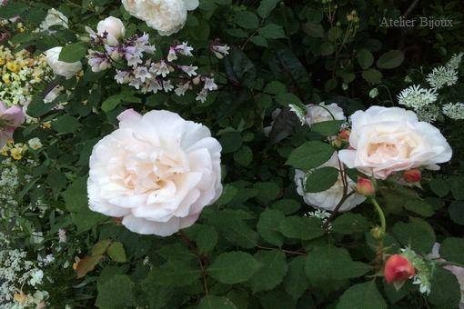 003-薔薇