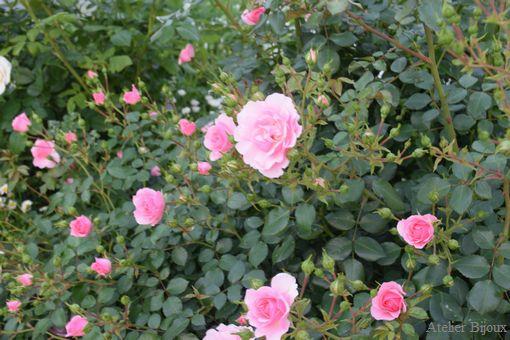 012-薔薇