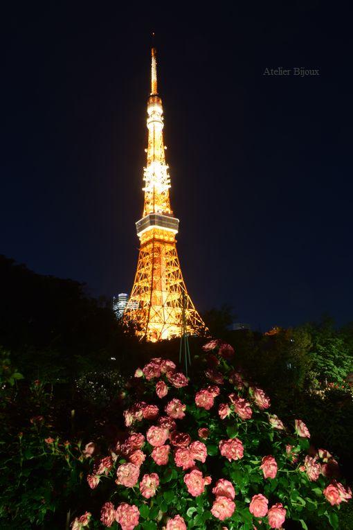 073-薔薇&東京タワー