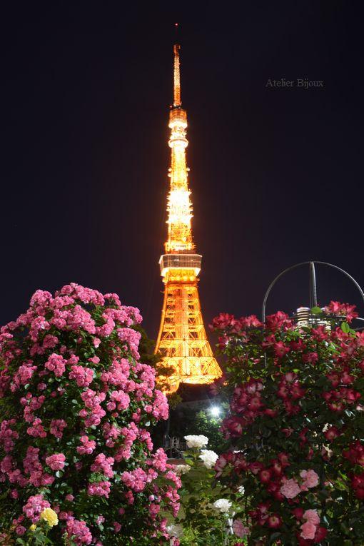 116-薔薇&東京タワー