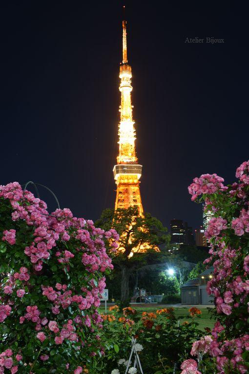 119-薔薇&東京タワー