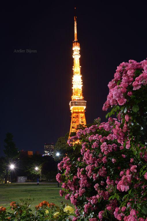 124-薔薇&東京タワー