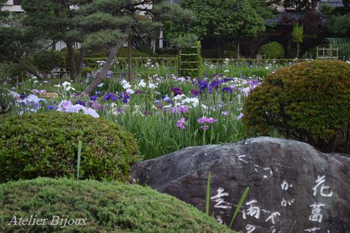 011-菖蒲園