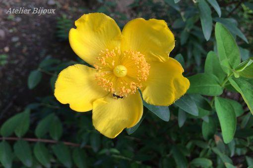 013-花と蟻