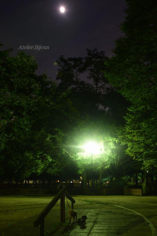 009ぷぅももか舎人公園