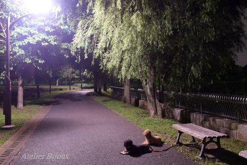 026-ぷぅももか舎人公園