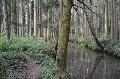 湧き水の川