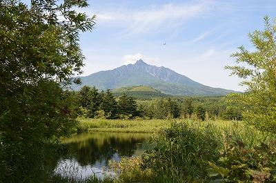 湿原から利尻富士