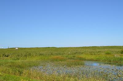 湿原その2