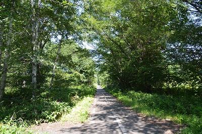 森の自転車道