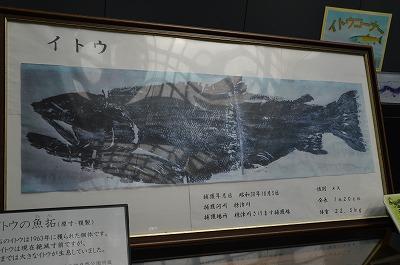 悪食な巨大魚