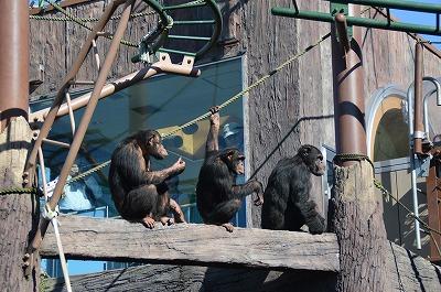 チンパントリオ