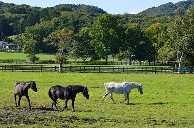 谷川牧場の馬