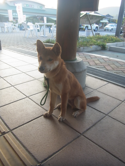 A dog in Tanoura