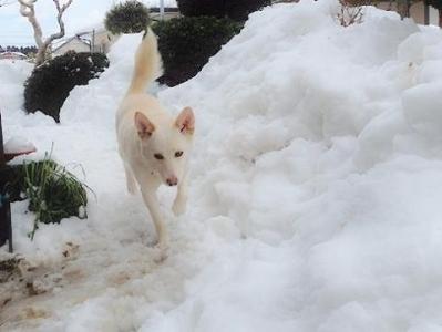 箱入りオオカミ (2)