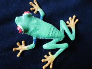 赤目蛙マグネット
