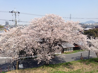 s-2014-04-9 (15)